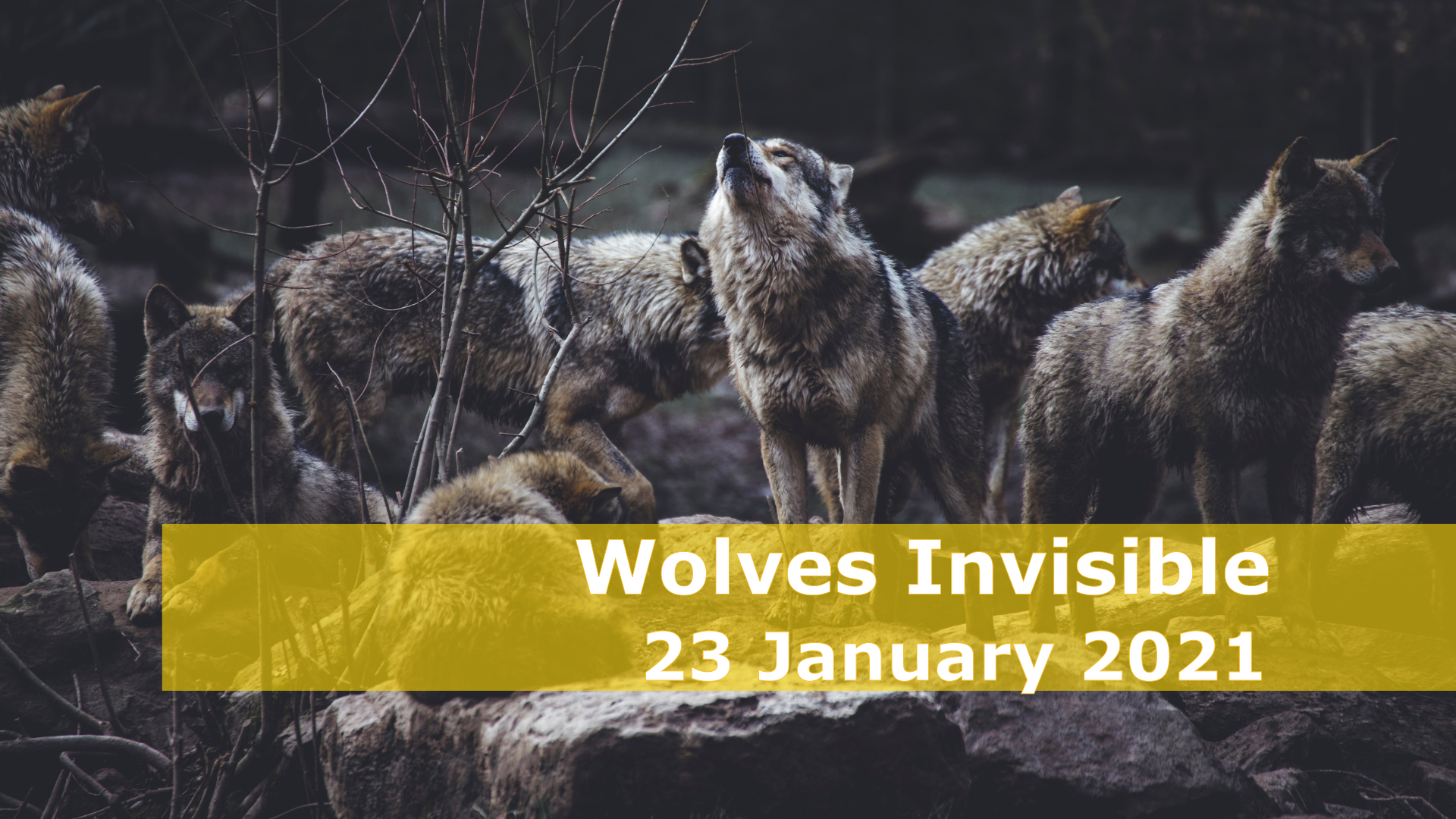 <span class='p-name'>Wolves Invisible — 23 January 2021 Devotional</span>